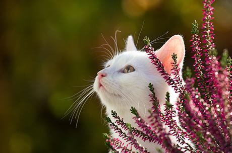ペット葬で用意するお花の選び方について