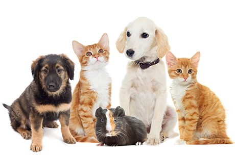 ペット葬での火葬 ペットの種類によって異なる注意点