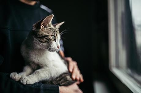 愛猫を最期まで見送るための、猫の葬儀の基本知識