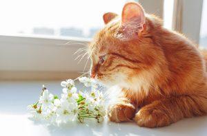 ペットのお悔みに最適な花や供物について