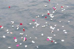 花びらを海へ撒く