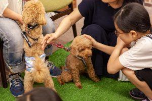 子供と触れ合う犬