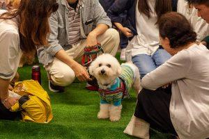 保護犬譲渡会の様子