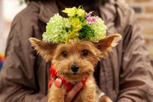 花と保護犬