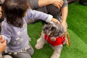子供と保護犬